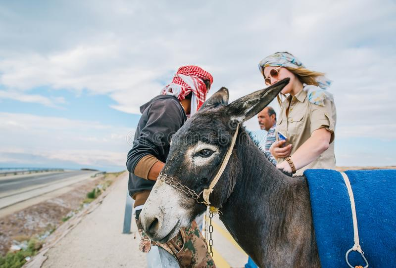 Portrait of donkey in a road. A tourist woman standing near stock photos