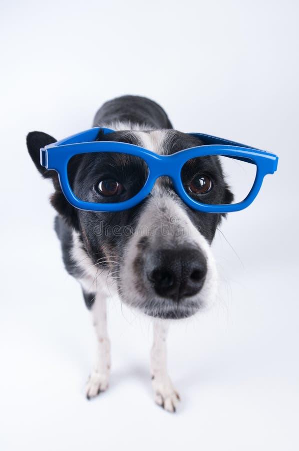 Portrait drôle de plan rapproché de chien photographie stock libre de droits