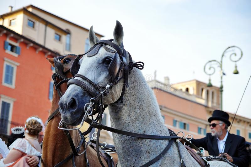 Traditional horse and carriage on Piazza Bra and Roman Arena in Verona, Italy. near of the amphitheatre stock photo