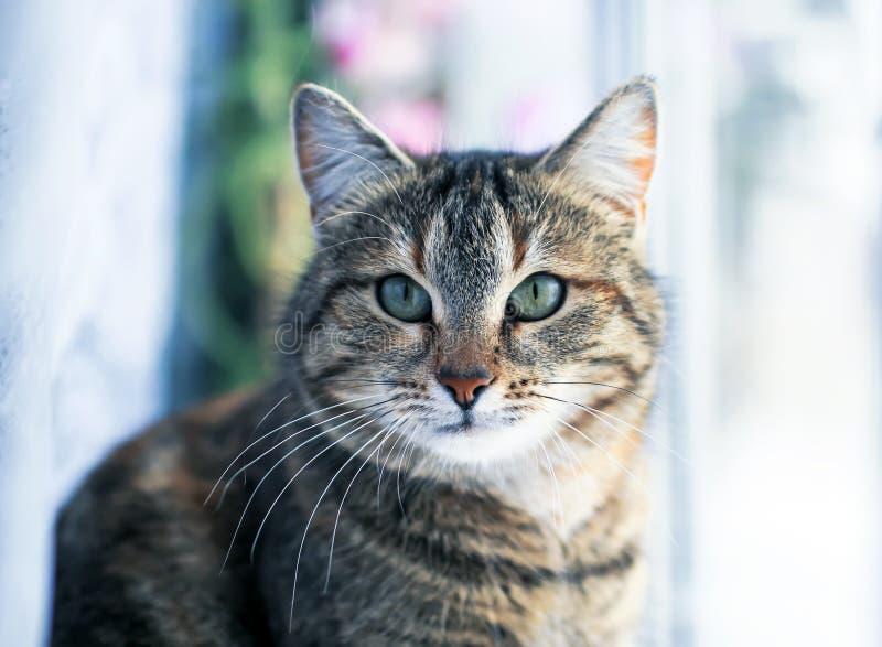 Portrait du chat énervé mignon se reposant sur la fenêtre entourée par les cercles lumineux de Tulle léger et blanc photographie stock