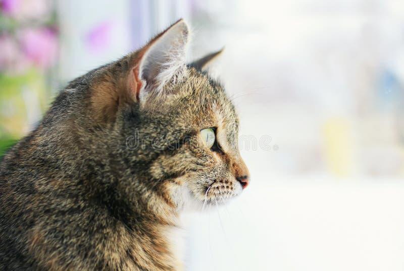 Portrait du chat énervé mignon se reposant sur la fenêtre et examinant la distance entouré par les cercles lumineux de la lumière photos stock