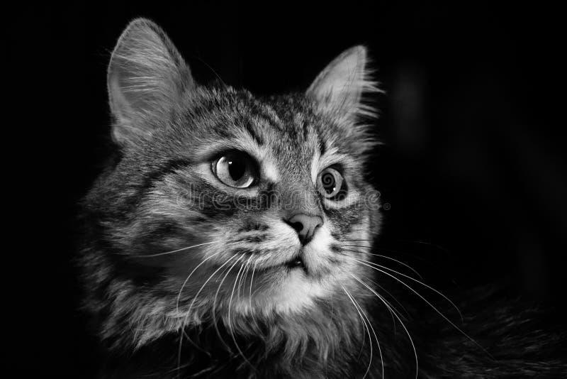 Portrait du chat image libre de droits