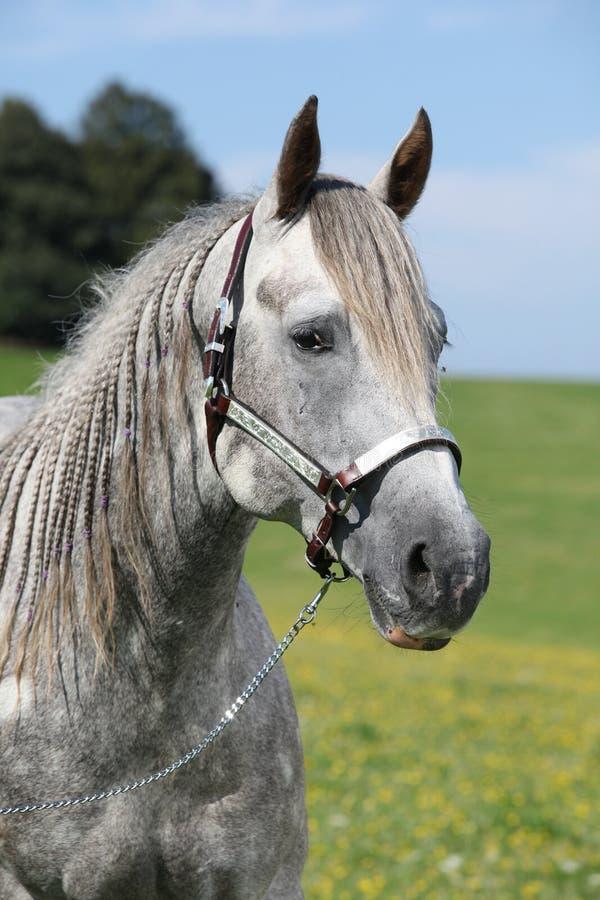 Portrait du cheval quart devant le beau paysage photo stock