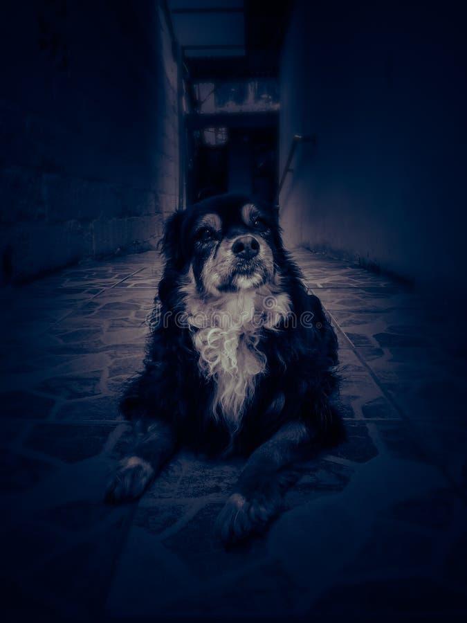 Portrait du chien assis sur le sol Animaux, race images stock