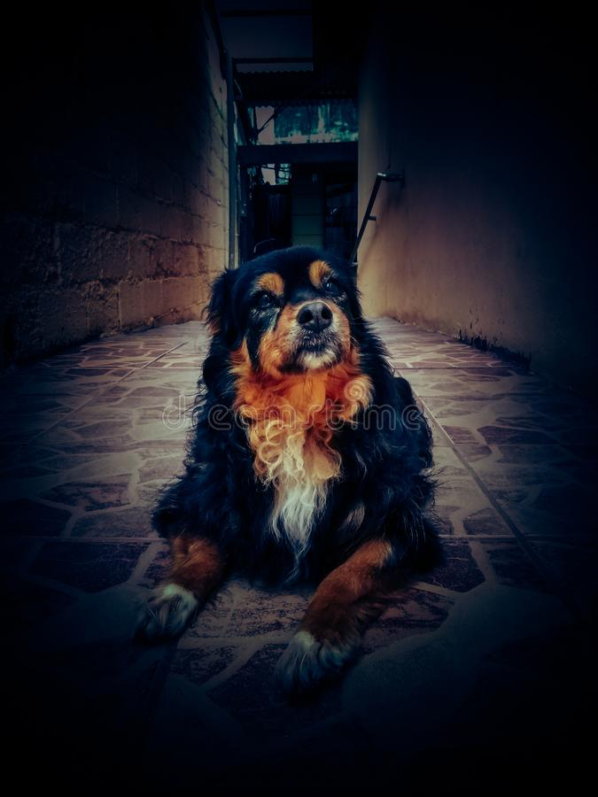 Portrait du chien assis sur le sol Animaux, race photo stock