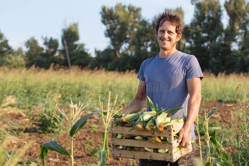 Portrait du jeune exploitant agricole de sourire heureux tenant la boîte en bois avec du maïs sur le champ image stock