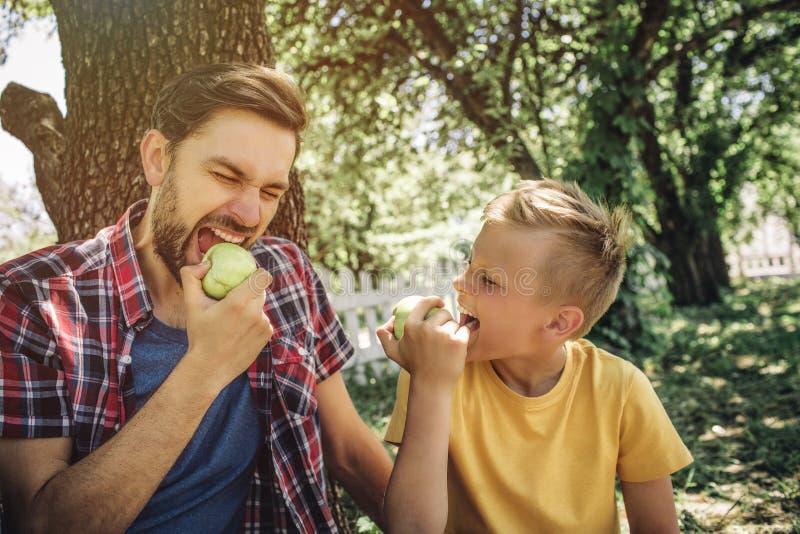 Portrait du père et du fils s'asseyant ensemble et mangeant des pommes Le type est morceau acéré de fruit avec des yeux fermés L' images stock