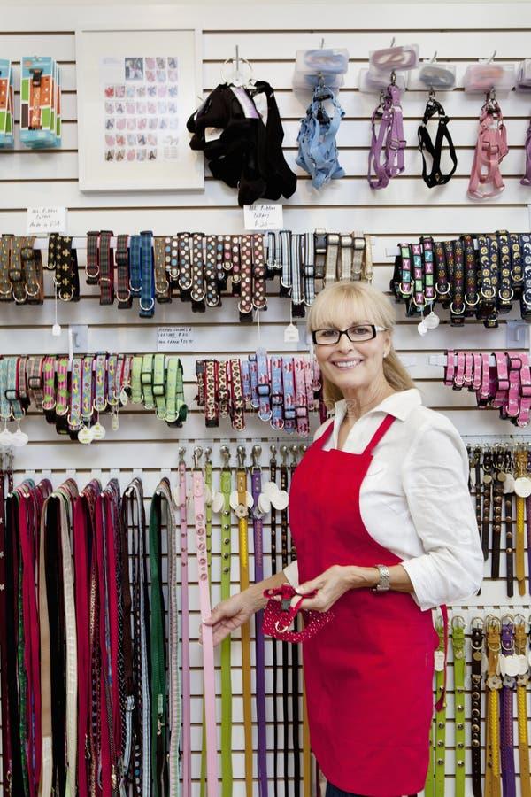 Portrait du propriétaire supérieur du magasin de bêtes montrant la ceinture photographie stock libre de droits