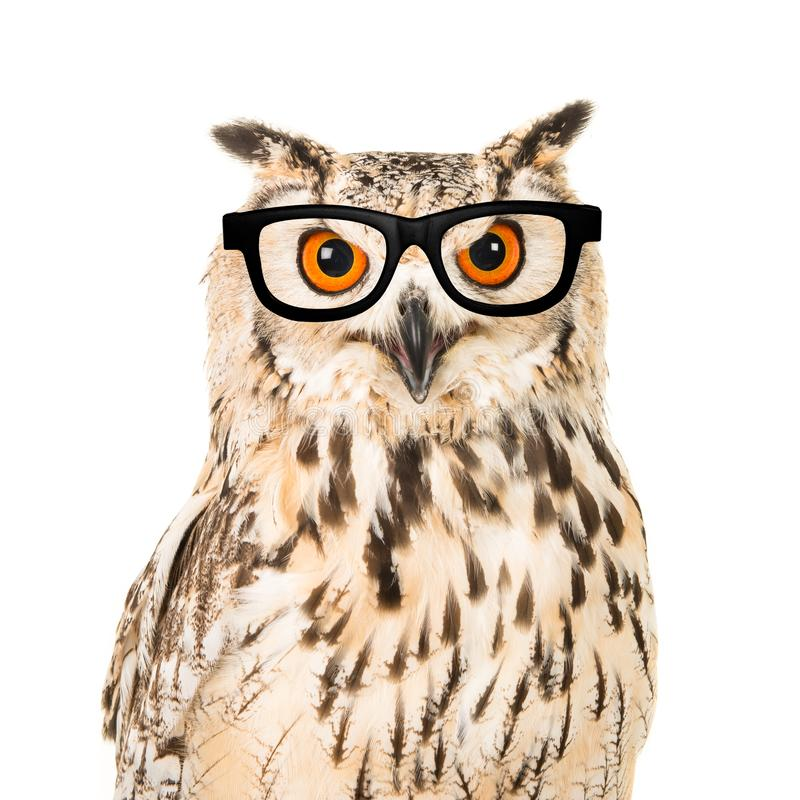 Portrait of an eagle owl with black glasses seen from the front on a white background. A portrait of an eagle owl with black glasses seen from the front on a stock images