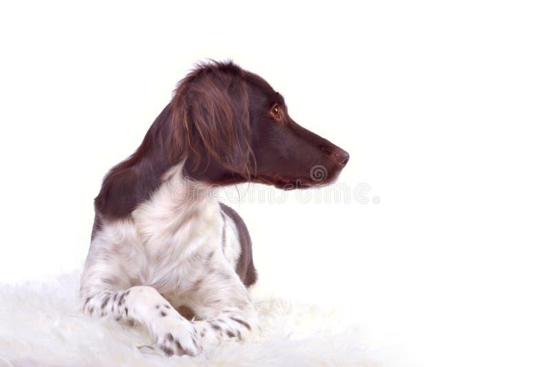 Portrait eines Hundes lizenzfreies stockbild