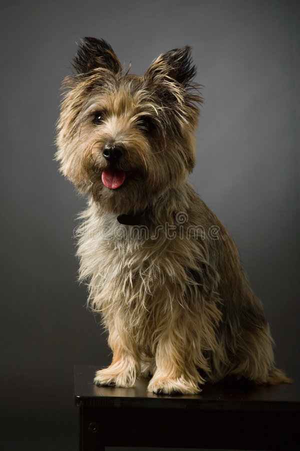 Portrait eines Hundes stockbilder