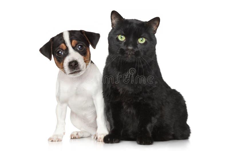 Portrait eines Hundes und der Katze auf weißem Hintergrund stockbild