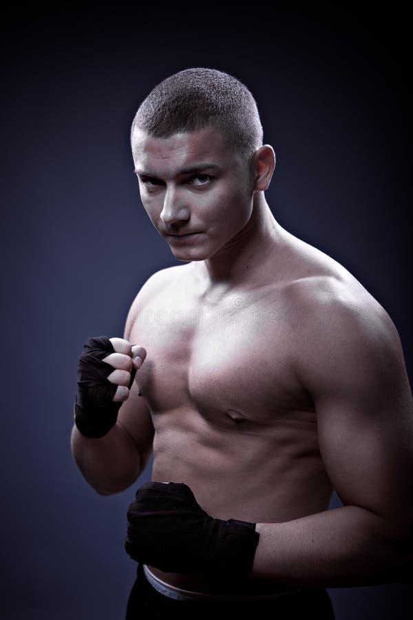 Portrait eines jungen Boxers stockbild