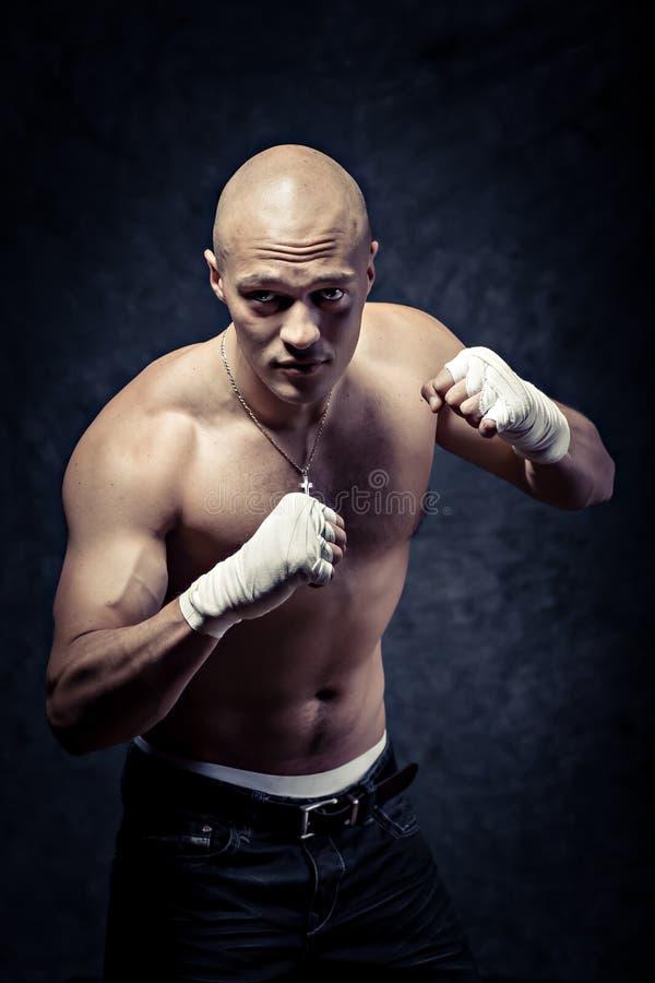 Portrait eines jungen Boxers stockbilder