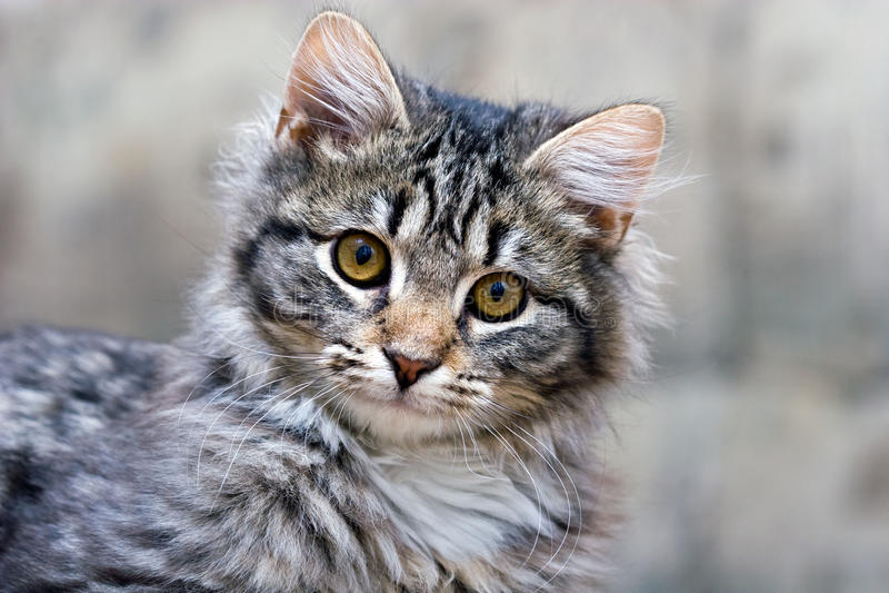 Portrait eines netten entzückenden Kätzchens der schönen Katze stockfoto