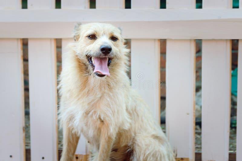 Portrait eines nicht reinrassigen Hundes stockfoto