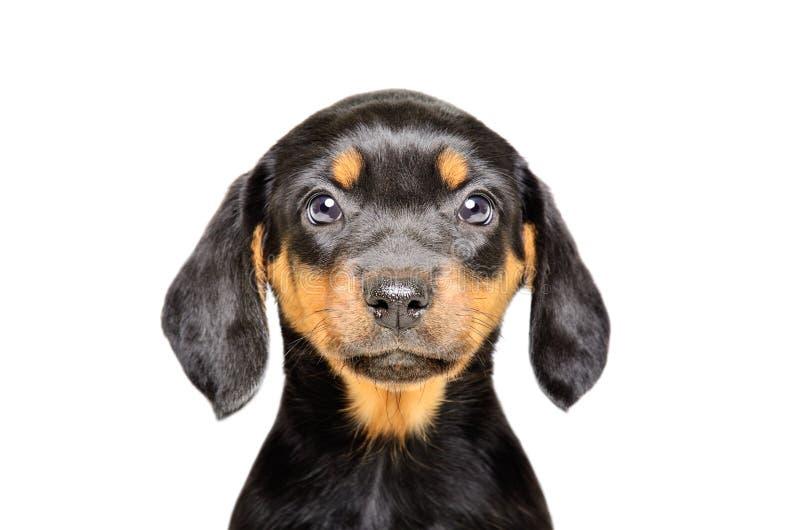 Portrait eines schönen Welpen stockfoto