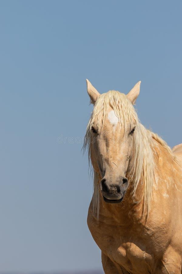 Portrait eines wilden Pferds lizenzfreies stockbild