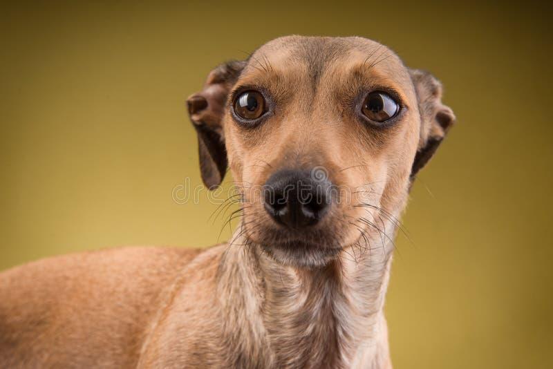 Portrait en gros plan du visage de chien photos libres de droits