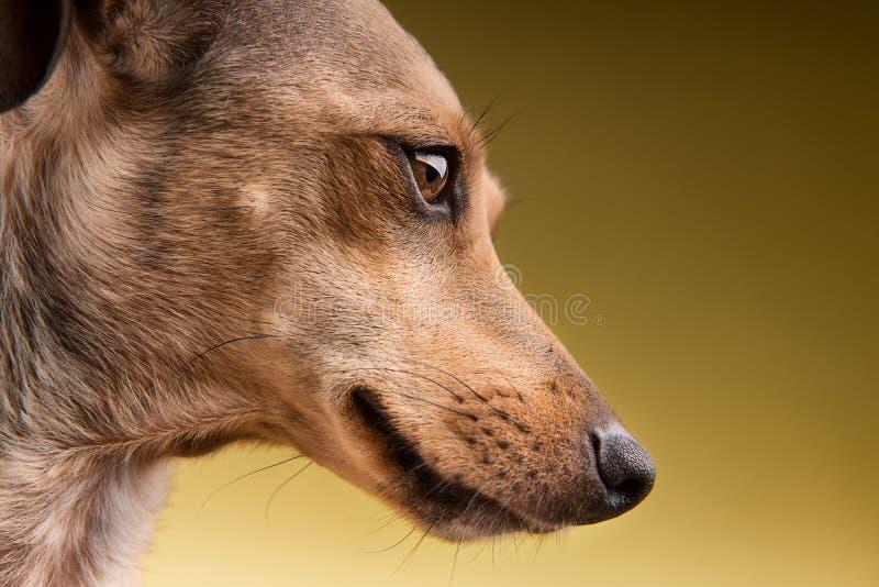 Portrait en gros plan du visage de chien photographie stock