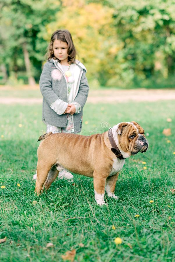 Portrait of beautiful girl. Portrait of English bulldog and child outdoor,selective focus stock photo