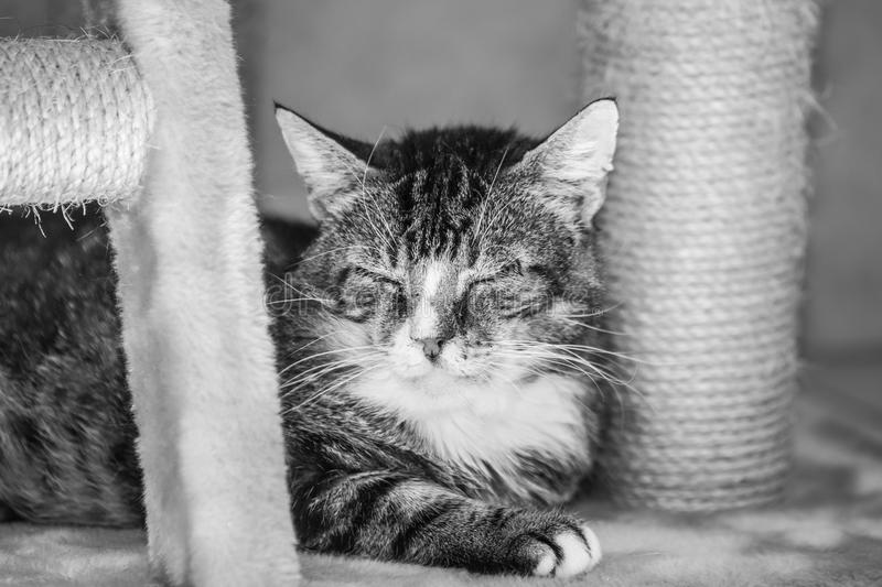 European cat living in belgium. Portrait of an european cat in animal shelter in belgium royalty free stock photography