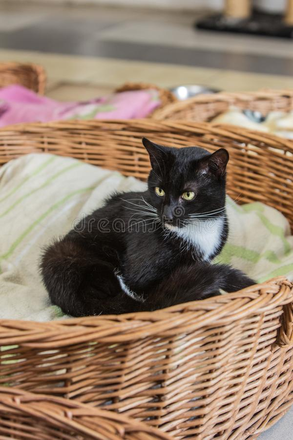 European cat in animal shelter in belgium. Portrait of european cat in animal shelter in belgium nand who was waiting for a new family in an animal shelter stock images