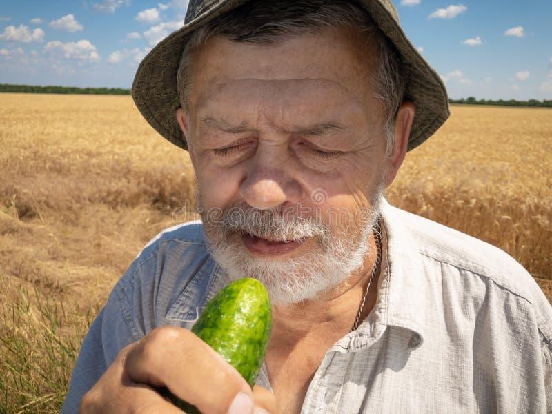 Portrait extérieur de concombre organique tout préparé d'agriculteur supérieur barbu photographie stock libre de droits