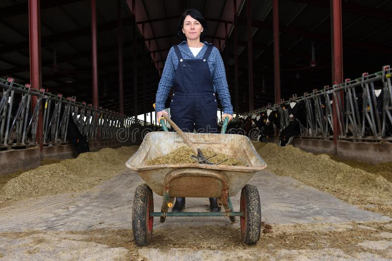 Portrait of a farm woman royalty free stock photo