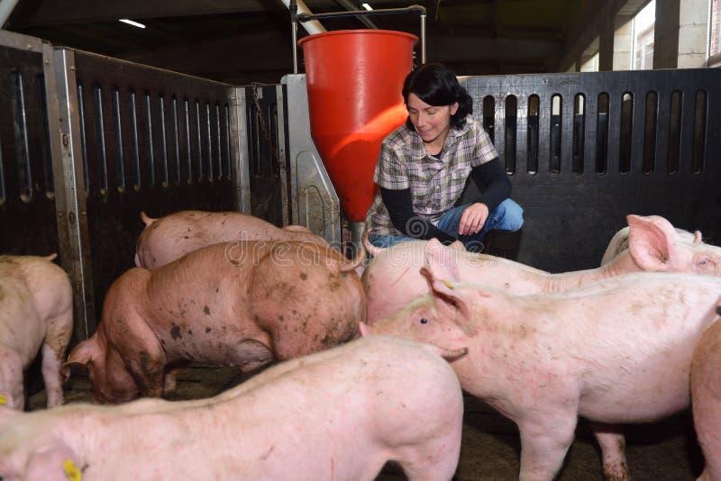 Portrait of a farm woman on a pig farm stock image
