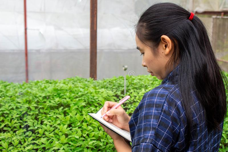 Portrait of a farmer Asian woman at work in greenhouse with notebook examines the growing seedlings on the farm and diseases in royalty free stock image