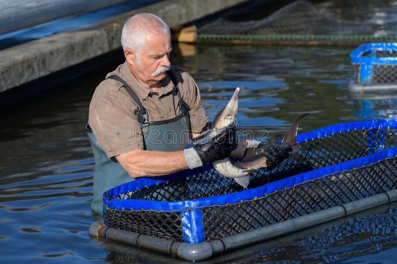 Portrait fisherman outside royalty free stock images