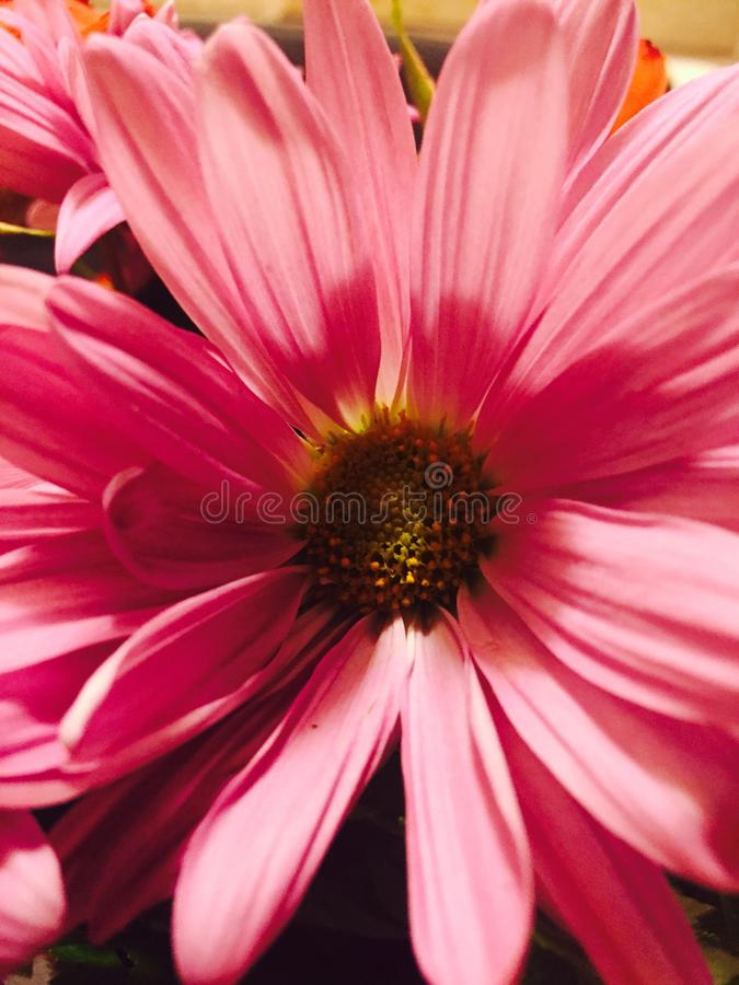 Portrait of a flower. stock images