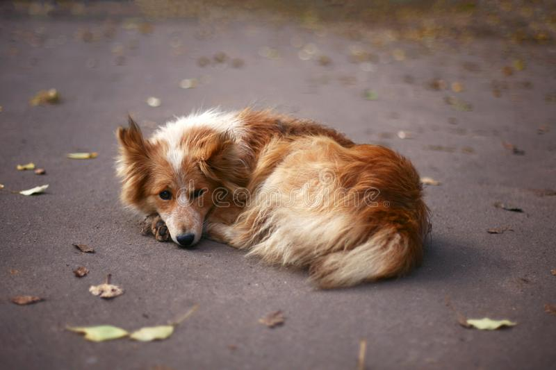 Portrait of fluffy dog in the park in autumn stock photo