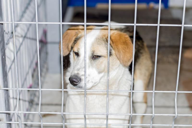 Portrait of a fold dog in a shelter cage royalty free stock photos