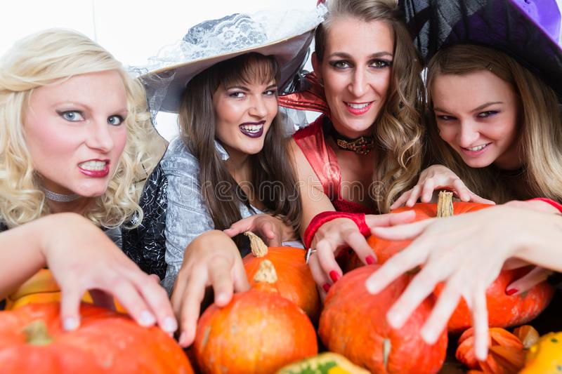 Portrait of four young and beautiful women looking at camera whi royalty free stock images