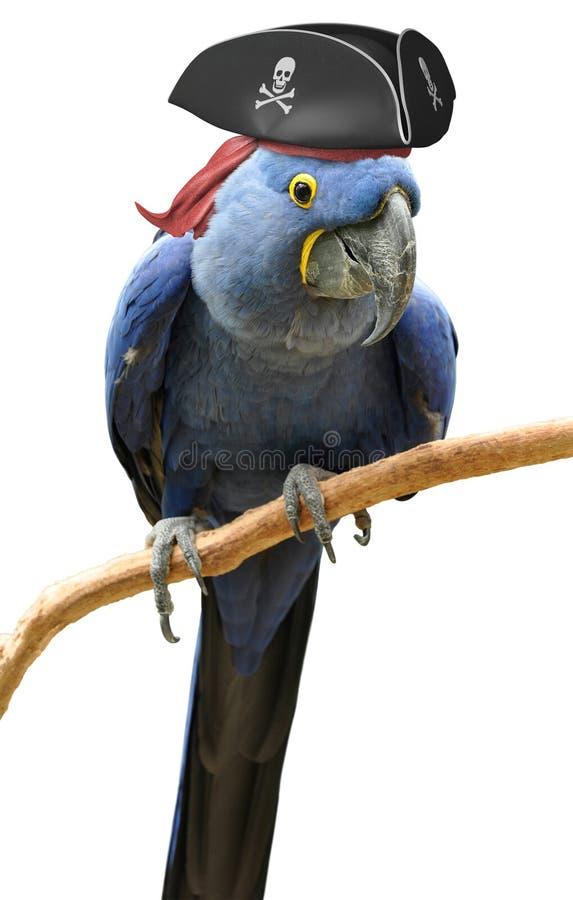 Portrait frais et peu commun d'oiseau de perroquet de pirate image stock