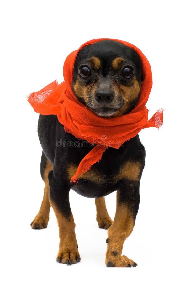 Portrait of funny dog stock image