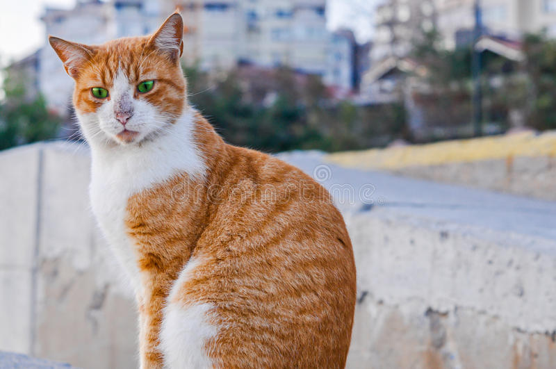 Portrait of a funny red stray cat with green eyes stock photos