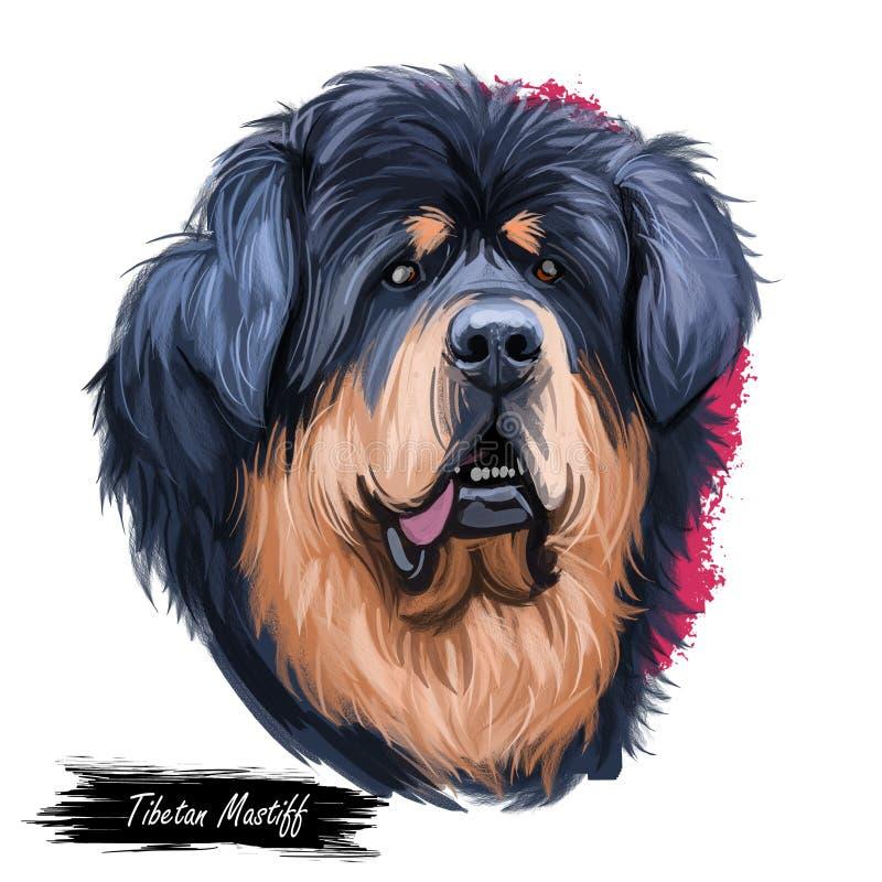Portrait géant de race de chien de taille de mastiff tibétain d'isolement sur le blanc Illustration d'art de Digital, dessin anim illustration stock