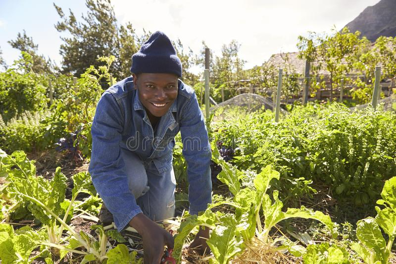 Portrait Of Gardener Working In Community Allotment royalty free stock photos