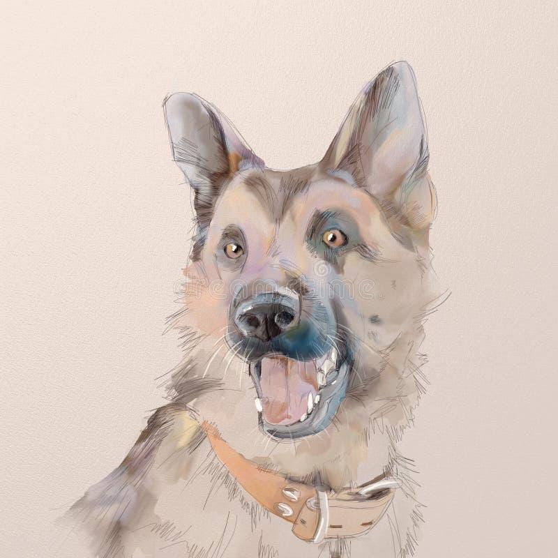Portrait of the german shepherd dog stock photos