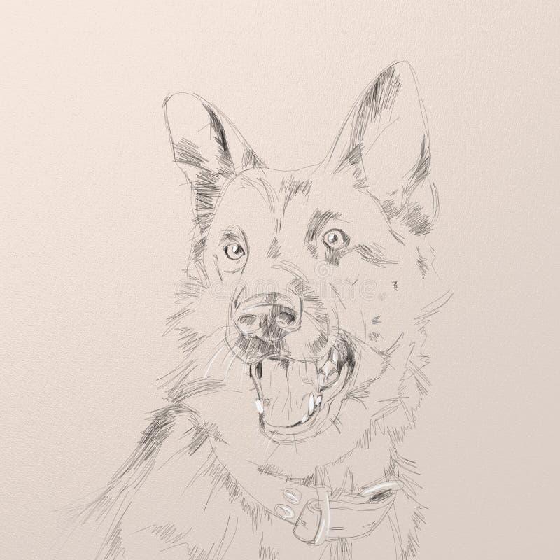 Portrait of the german shepherd dog royalty free stock photos