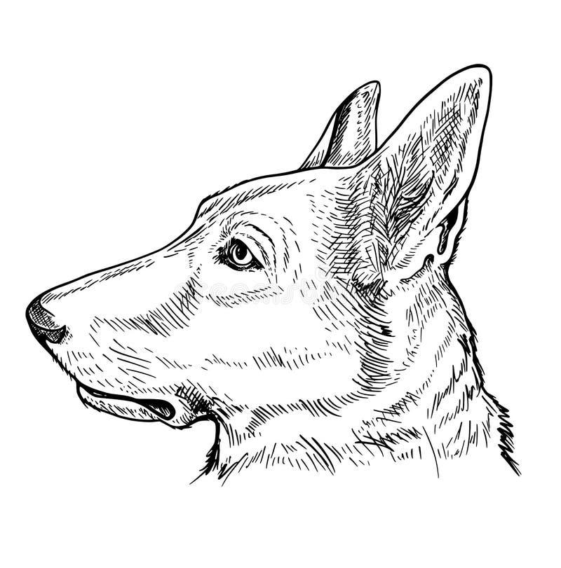 Portrait of German Shepherd dog royalty free illustration