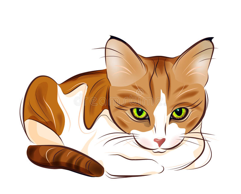 Download Portrait Of  Ginger Tabby Cat Stock Vector - Image: 18938919