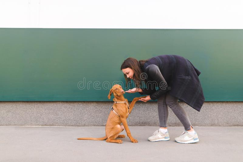 Girl and a little dog against the background of the wall. A woman plays with a puppy. Portrait of a girl and a little dog against the background of the wall. A royalty free stock photography