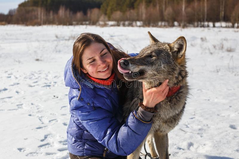 Portrait of a girl trainer and a gray wolf in a snowy field stock photos