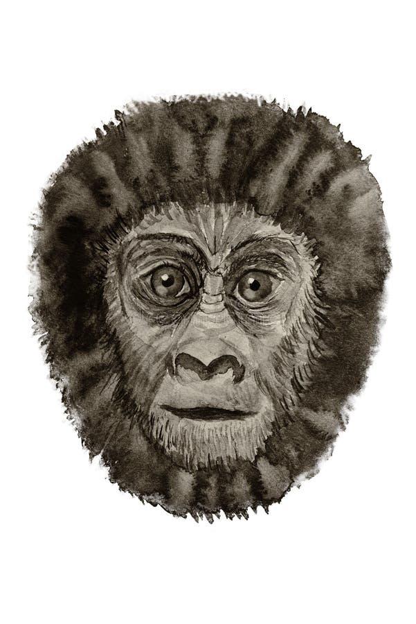 Portrait of a gorilla watercolor stock photo