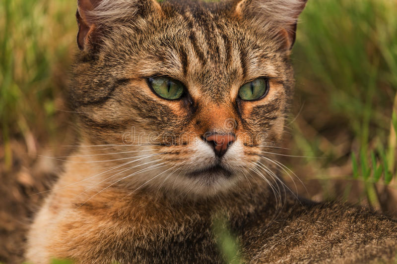 Portrait of green-eyed cat in nature stock photography
