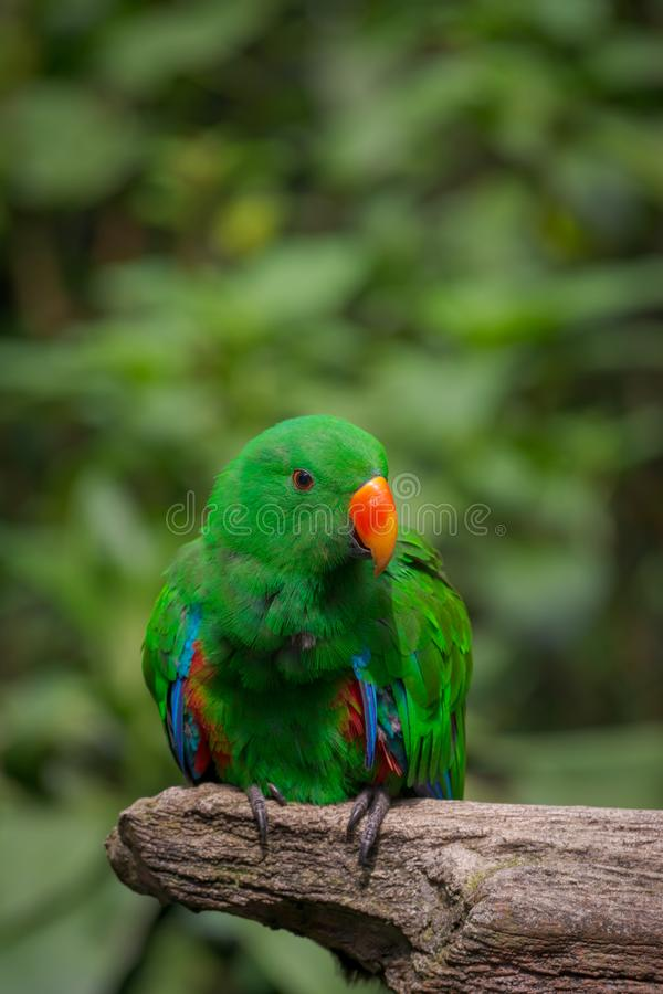 Green parrot. Portrait of green parrot isolated natural bokeh background stock photo